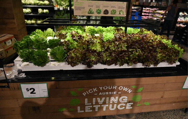 Lettuce for sale at Woolworths