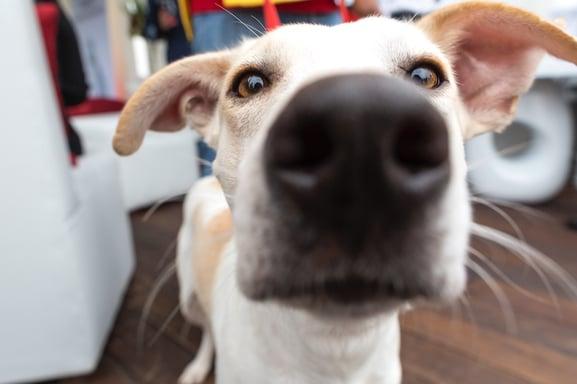 pet-camera-orion-security-camera