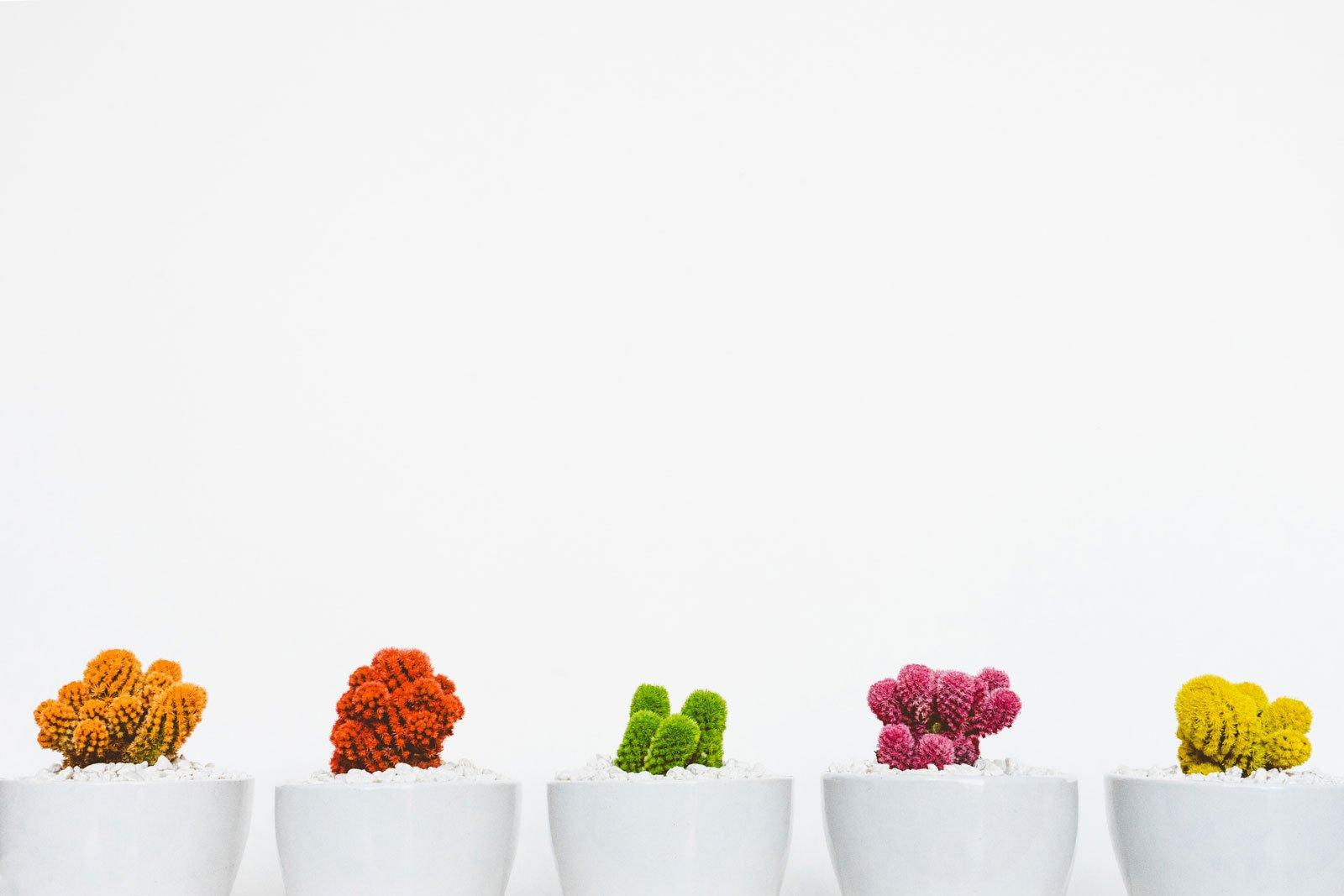 Colour plants